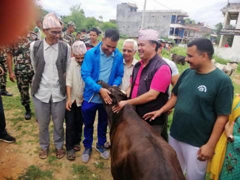 तुलसीपुरले सुरु गर्यो छाडा गाई व्यवस्थापन