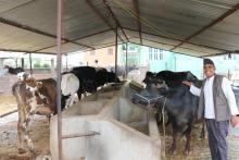 पशु शाखाले विहिवारबाट किसानको घरदैलोमा पुगेर पशुमा लाग्ने खोरेत रोग विरुद्धको खोप दिन सुरु गरेको छ ।